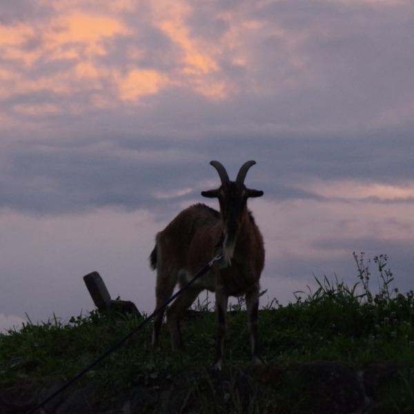 「夕空と山羊」