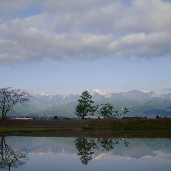 初夏の北アルプスと水田