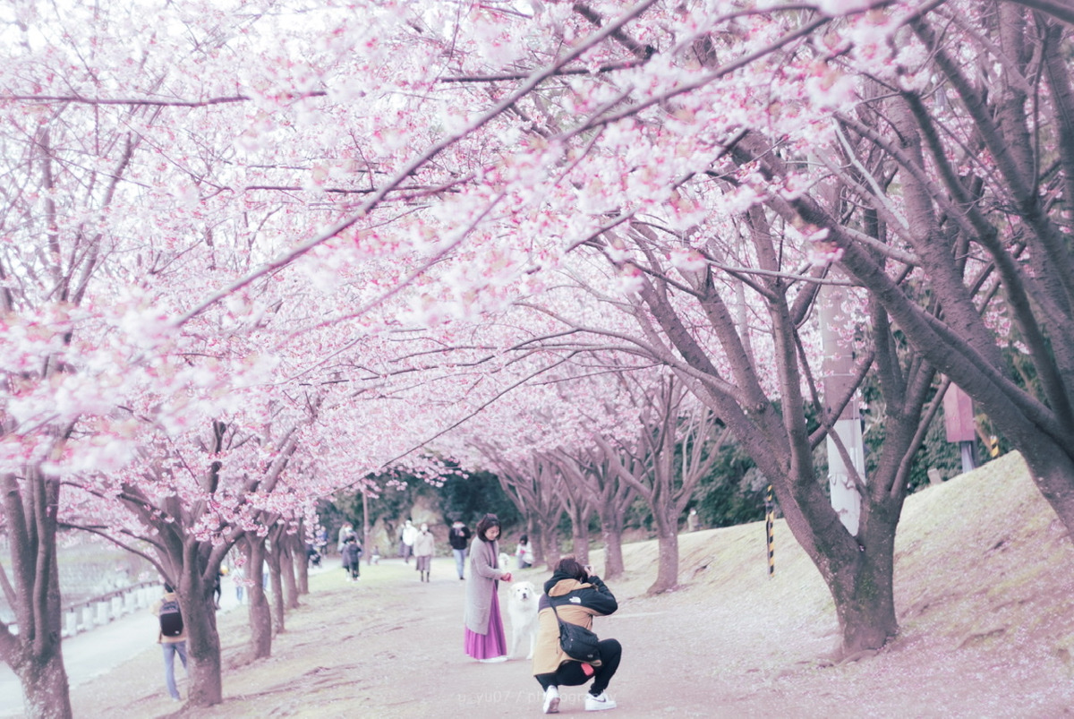 SAKURA PHOTO TIME