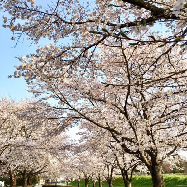 さくら (栃木県)