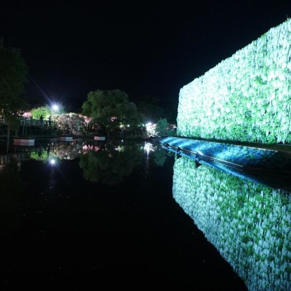 白藤の滝2019✨シンメトリー空間