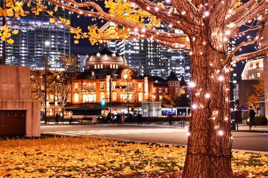 イチョウ東京駅の夜景2