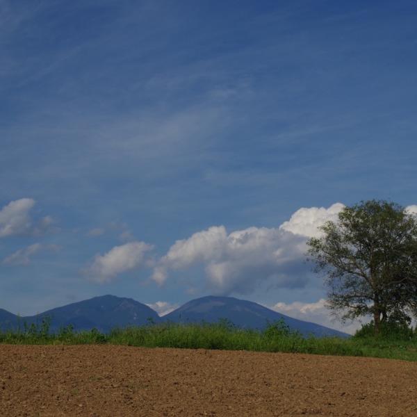 「御牧ヶ台地の一本胡桃と浅間山」