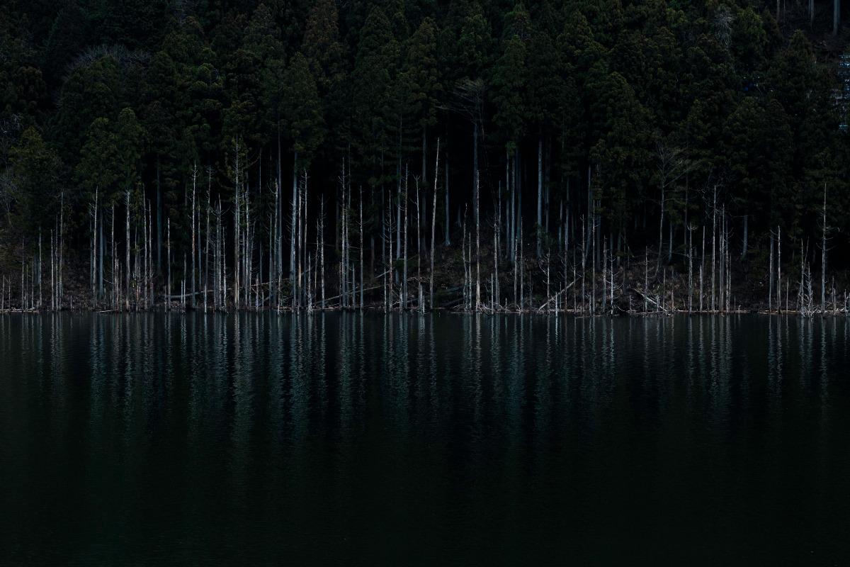 立ち枯れ木