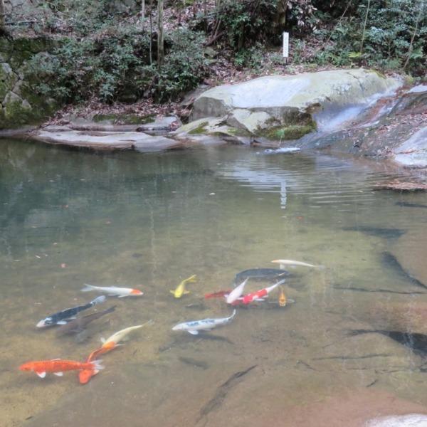 杉谷の里山・滑石渓流の石文とい鯉の里