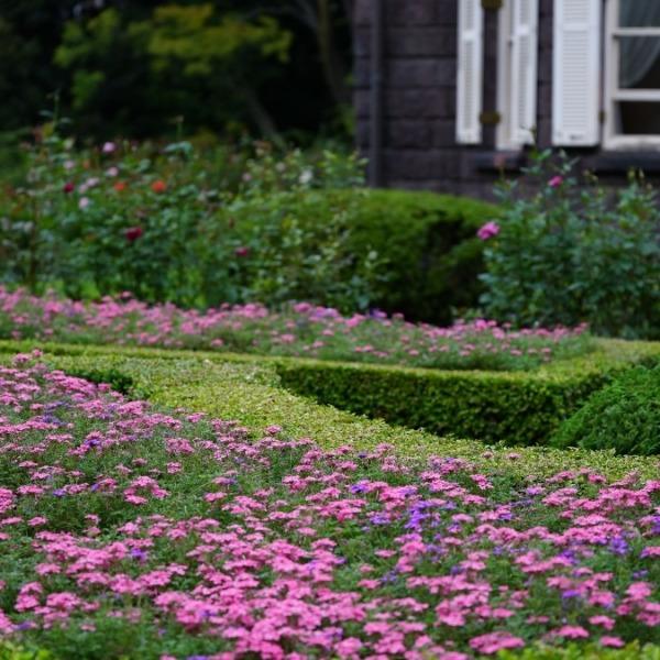 旧古河庭園:彩🌹色鮮やか✨