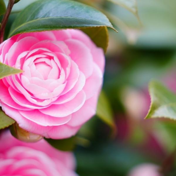 ピンクの微笑み💖2021/日比谷公園