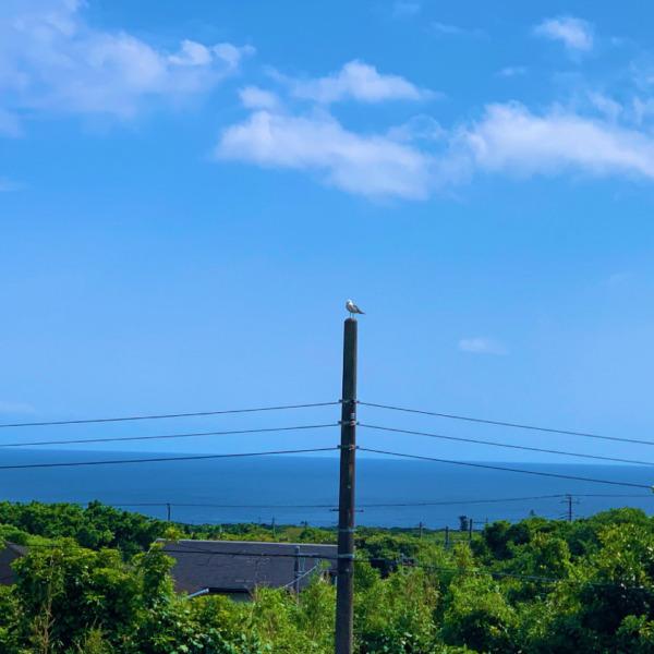 八丈島の空とカモメ