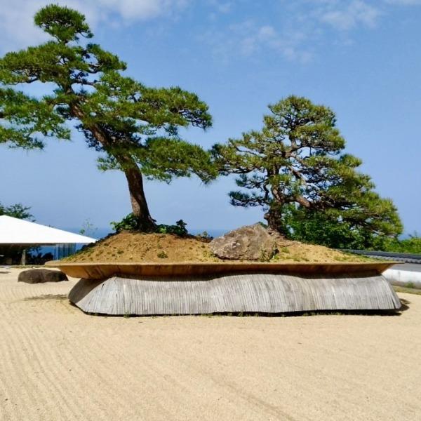 アカオハーブ&ローズガーデン 世界最大の盆栽「鳳凰の松」