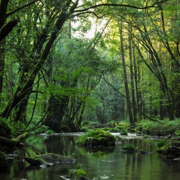 悠久の森にて2