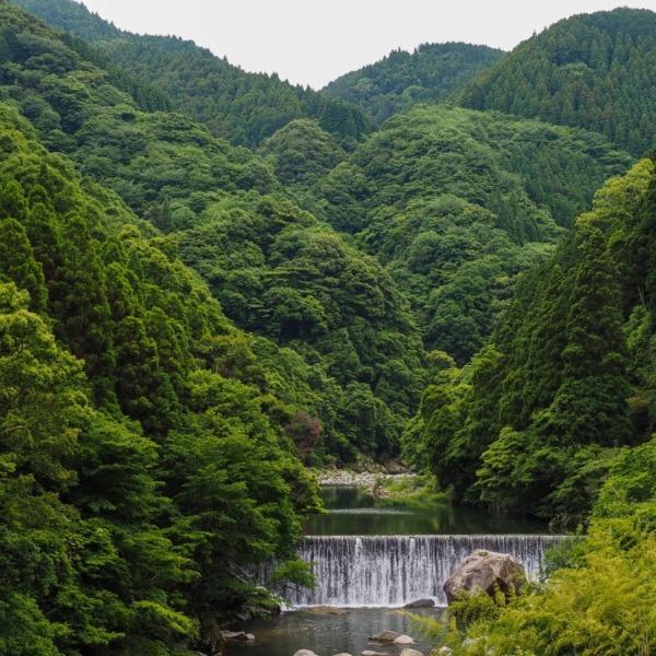 深緑の山々