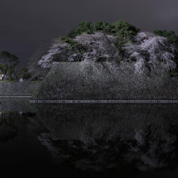 名古屋城 夜桜