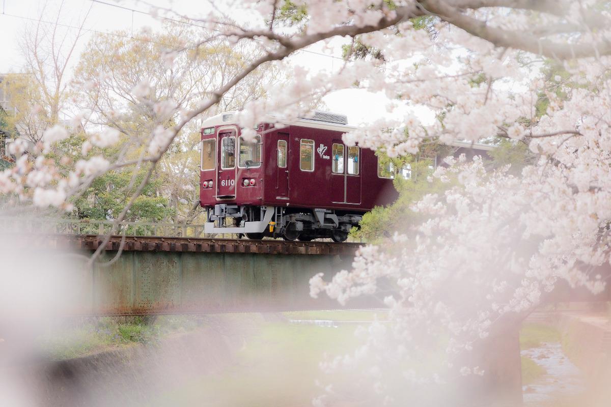 阪急電車と桜
