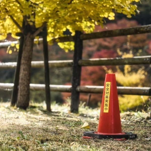 黄葉と安全対策実施中