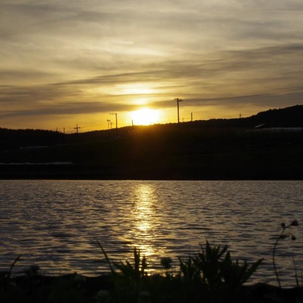 「田んぼに映る夕陽」