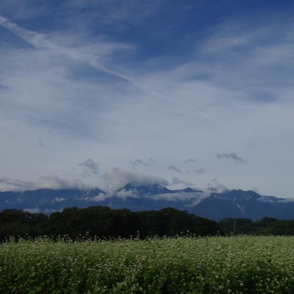 「蕎麦の花と甲斐駒ヶ岳」