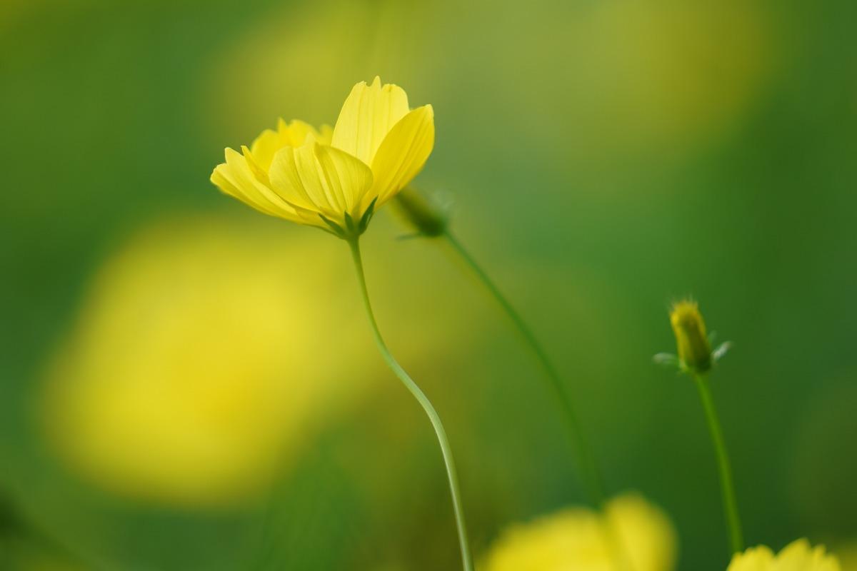 レモンブライト:昭和記念公園(回想編)Evergreen