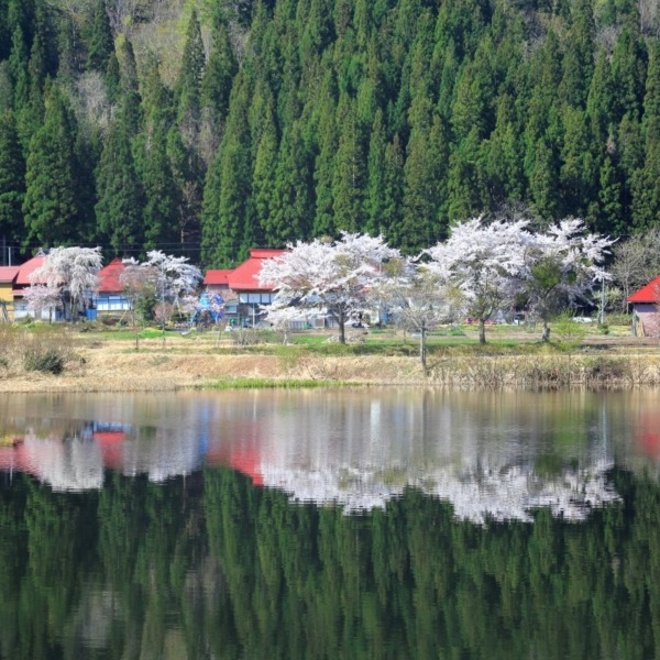 太郎布の春