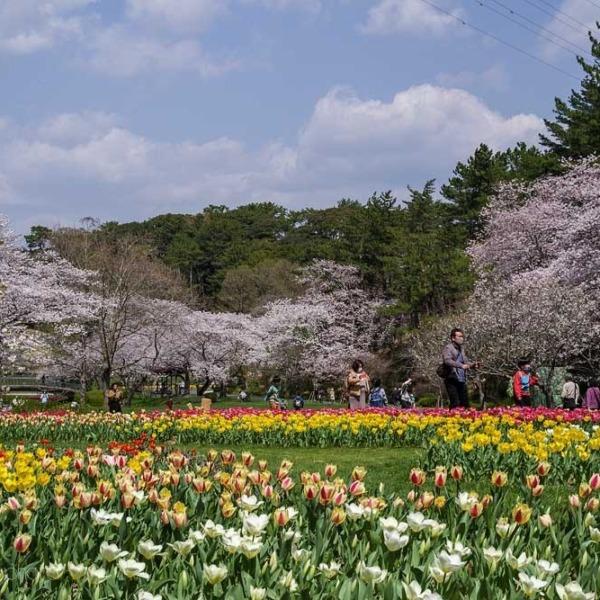 浜松フラワーパークの桜 9