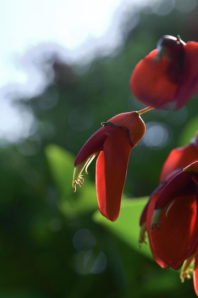 Signs of flowering