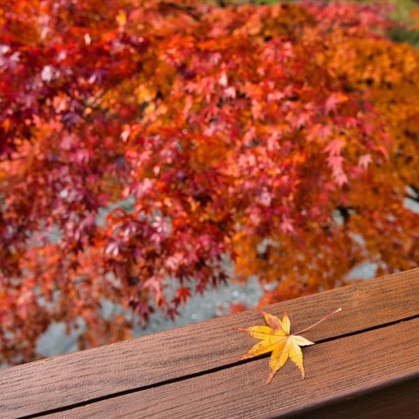 一葉と紅葉