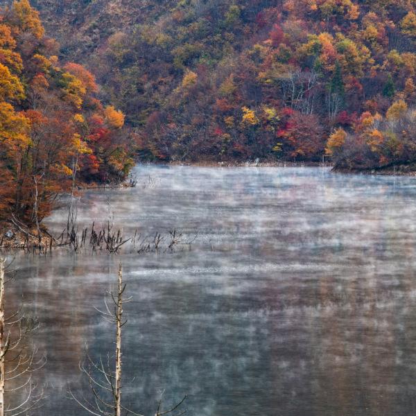 徳山ダム湖 紅葉 自然は生きてる