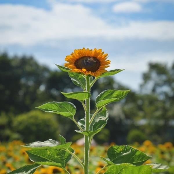 『夏、花盛り。』